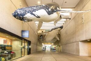 Queensland Museum entrance