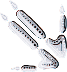 Kangaroo-Foot
